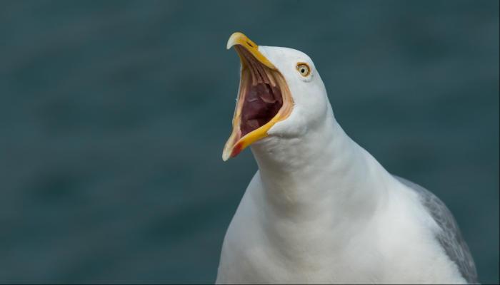 Lone Gull 10K